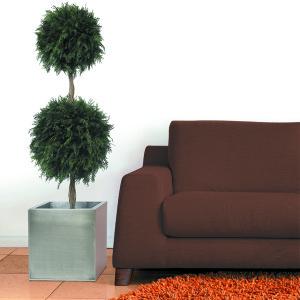 Topiary Thuja | 140 cm
