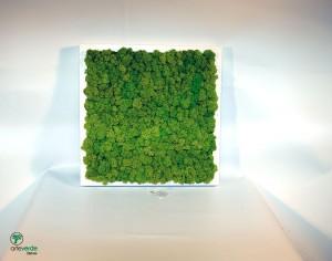 quadro lichene 35x35 cm