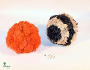 sfere lichene