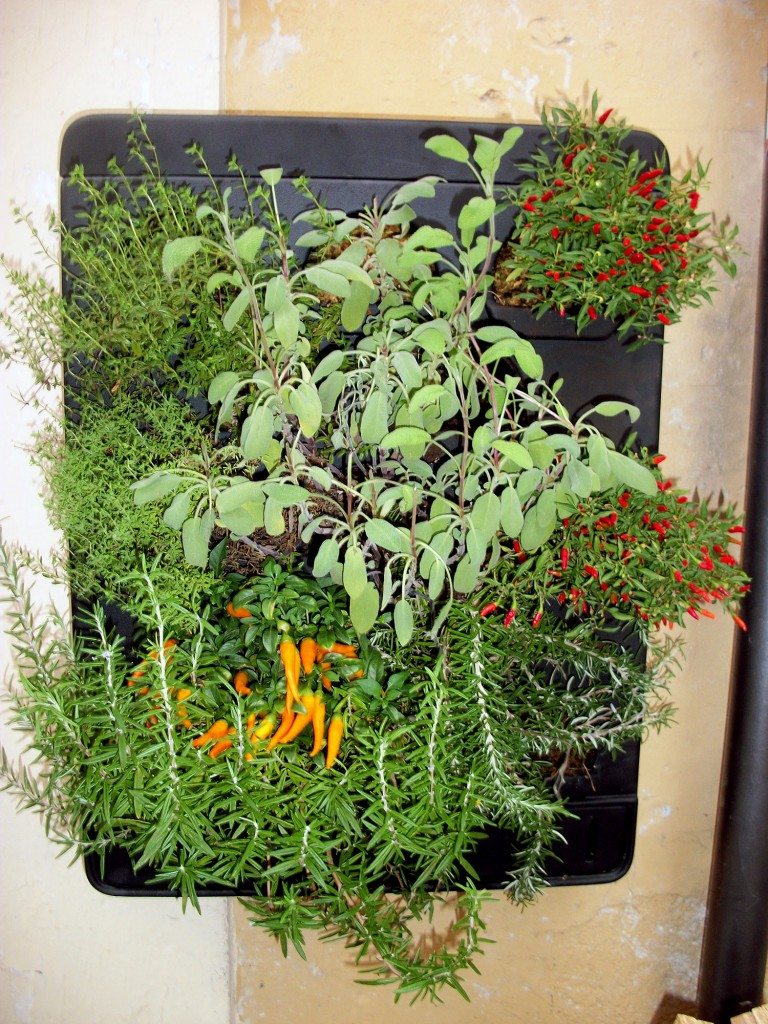 Giardini verticali arteverde senigallia - Piante da parete ...