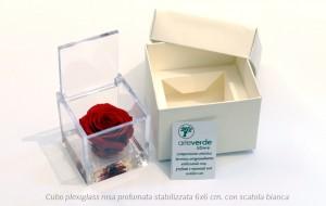 Cubo plexiglass rosa profumata stabilizzata 6x6 cm con scatola bianca