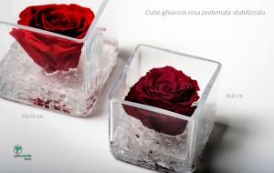 cubo ghiaccio rosa profumata stabilizzata
