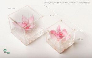 cubo plexiglass orchidee profumate stabilizzate