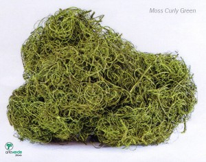moss curly green