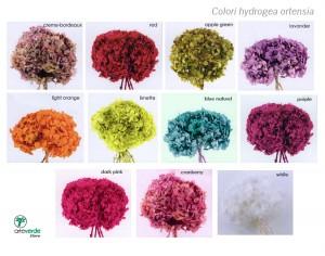 colori ortensia arteverde store