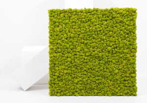 Mattonella lichene 75x75 cm