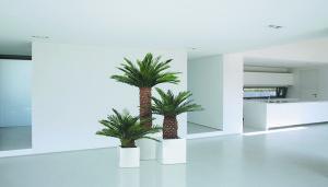 Palmera Cycas | 100-150-200 cm