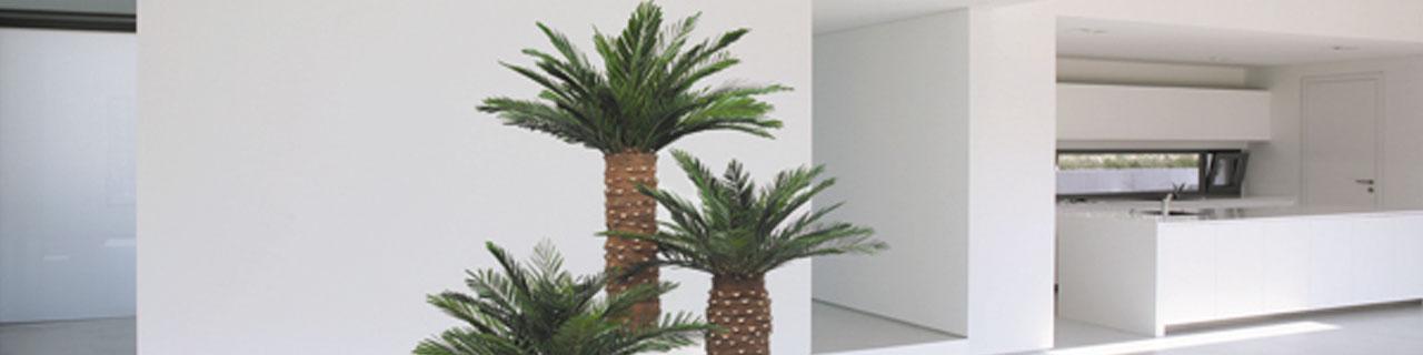 piante stabilizzate ArteVerde