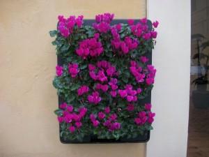 giardino verticale ArteVerde Senigallia