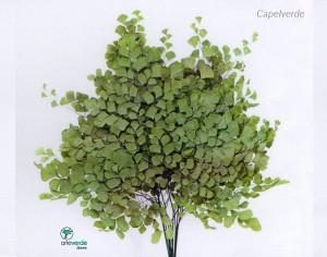 capelverde