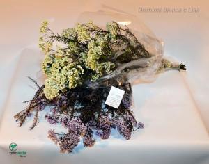 dismiosi bianca e lilla