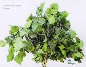 hedera arborea green