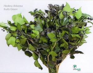 hedera arborea fruits green