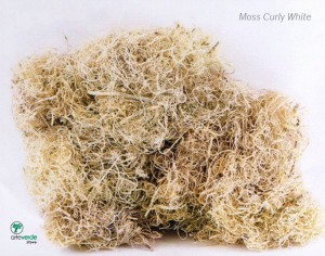 moss curly white