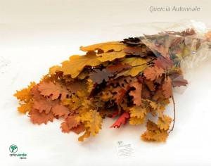 quercia autunnale