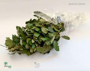 quercia green